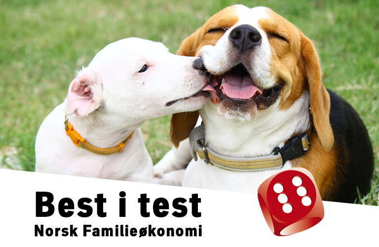 Hundeforsikring best i test